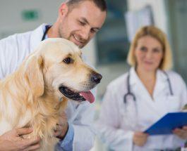 Fizjoterapia psów i Fizjoterapia zwierząt